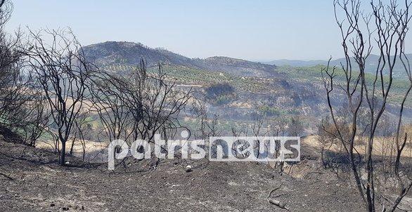 Θλιβερές εικόνες στην Ηλεία - Καμμένη γη άφησε πίσω της η πυρκαγιά στα χωριά της Ολυμπίας